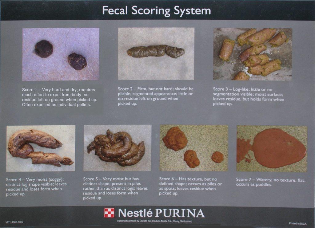 feral scoring chart